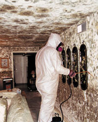 Is Black Mold In Bathroom Harmful toxic housing : republic of lakotah – mitakuye oyasin